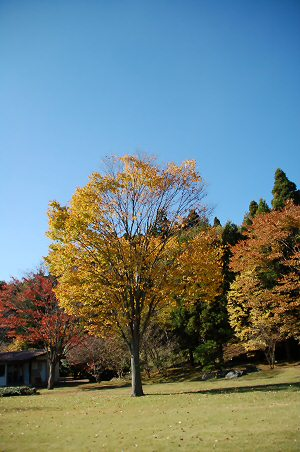 071121kawamura