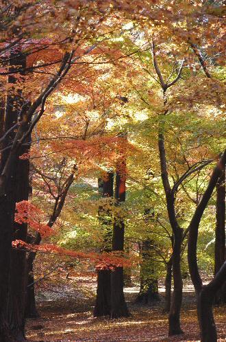 091204momijiyama