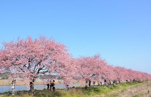 200301kawazu